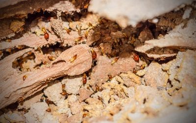 5 Effective Ways to Prevent Termites In Your Home