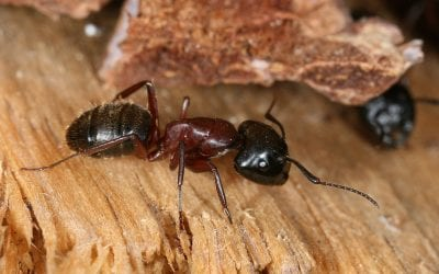 3 Wood-Destroying Insects Besides Termites That Damage Your Home